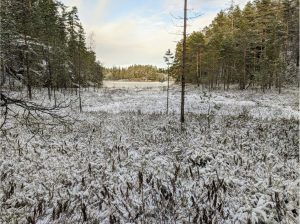 Nuuksion Huurteinen 2020 @ Nuuksio, Espoo